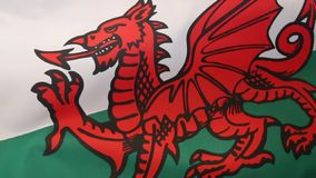 Flag of Wales - United Kingdom. The flag of Wales in the United Kingdom. The flag incorporates the Red Dragon of Cadwaladr, King of Gwynedd, along with the Tudor stock video