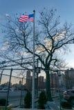 Flaga Ameryka?ska, gwiazdy i lampasy dmucha w wiatrze, ptaki siedzi w bezlistnym drzewie w tle, ?rodek miasta obraz stock