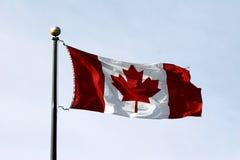 flaga kanady klonów liściach Fotografia Royalty Free