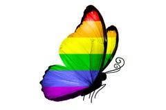 Flaga LGBT na skrzydłach motyl pojedynczy białe tło fotografia royalty free
