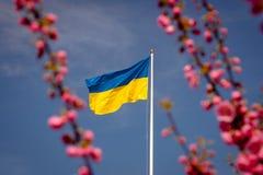 Flaga Ukraina przeciw czereśniowemu okwitnięciu fotografia stock