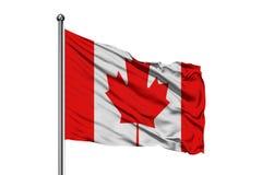 Flagga av Kanada som vinkar i vinden, isolerad vit bakgrund kanadensisk flagga arkivfoto