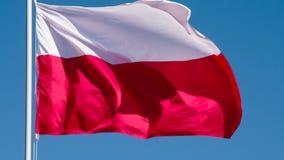 Flagga av Polen som fladdrar i vinden arkivfilmer