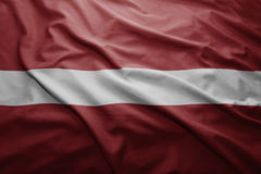 flagga latvia Royaltyfri Bild