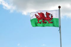 flagga welsh Arkivfoto