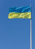 flaggaukrainare Arkivbilder