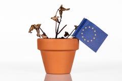 Flagge von EU oder von Europa in einem Blumentopf mit Dürrenblume Stockbilder