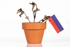 Flagge von Russland oder von Russischer Föderation in einem Blumentopf mit Dürre stockbilder