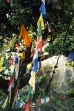 Flaggen, die von den Bäumen in Nepal hängen lizenzfreie stockbilder