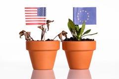 Flaggen von USA und von Europa in einem Blumentopf mit Dürre blühen Stockfotografie