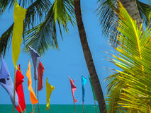 Flags on the beach. Flags and coconut palm on the beach - Carneiros beach - Porto de Galinhas - Recife - Northeast of Brazil Royalty Free Stock Photography