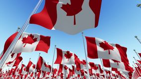 Flags of Canada on flag poles against blue sky stock video footage