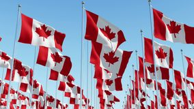 Flags of Canada waving against clear blue sky. stock video