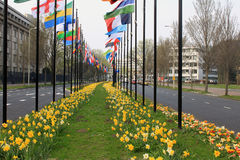 flags den hague internationalen Royaltyfri Fotografi