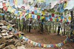 flags den tibetana bönen Arkivbild