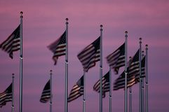 Flags at Dusk. American flags at dusk, fluttering in the breeze. Long exposure stock photography