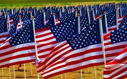 Flags in a field. Flags flying in a field to remember Americans killed in Iraq Stock Photography