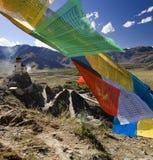 flags himalayasbönen tibet Arkivbilder