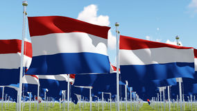 Flags of Netherlands in green field against blue sky. Three dimensional 3D rendering illustration Stock Photo
