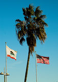 Flags and palm. Palm tree surrounded by CA and American flags Royalty Free Stock Photography