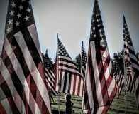 Flags of Valor. Forest Park Stock Photo