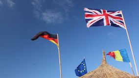 Flags waving and reed stock footage