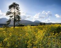 Flagstaff λιβάδι Στοκ Εικόνες
