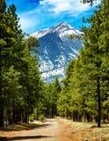Flagstaff δρόμος της Αριζόνα στα βουνά Στοκ εικόνα με δικαίωμα ελεύθερης χρήσης