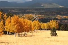 Flagstaff o Arizona da cor da queda (4) fotos de stock