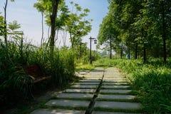 Flagstone-bedekte weg in installaties en bomen van zonnige de zomerochtend royalty-vrije stock afbeeldingen