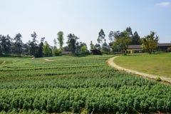 Flagstone bedekte weg op bloemgebied op zonnige de lentedag royalty-vrije stock afbeelding
