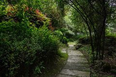 Flagstone path in shady woods on sunny summer day Stock Image
