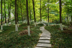 Flagstone path in verdant woods Stock Photos