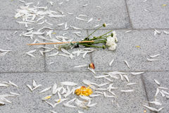 Flagstone pavement with petals. Stock Images