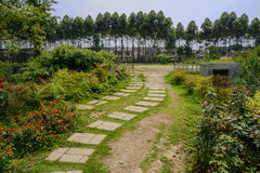 Flagstone pavement in sunny summer Royalty Free Stock Photo