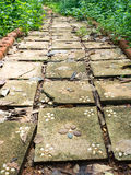 Flagstone walkway with plant Royalty Free Stock Image