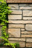 Flagstone wall with climbing ivy Royalty Free Stock Images
