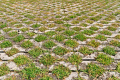 Flagstones with green grasses patern Royalty Free Stock Photos