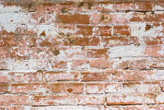 Flaked-off whitewashed brick wall Royalty Free Stock Image