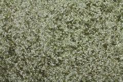 Flakes on an of smokeless powder Royalty Free Stock Photo
