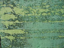 Flaking Color. Flaking green color on a wooden door Royalty Free Stock Images