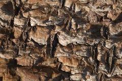 Flaking pine bark Royalty Free Stock Photography