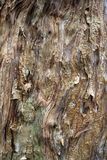 Flaky Bark Royalty Free Stock Image