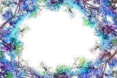 Flam-boyant цветок как граница рамки и космос экземпляра для задней части текста Стоковые Изображения