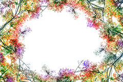Flam-boyant flower as frame border and copy space for text back Stock Image