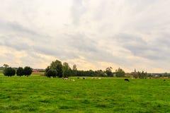 Flamandzki wieś krajobraz obraz royalty free