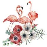 Flamant d'aquarelle avec le bouquet d'anémone Oiseaux exotiques peints à la main avec des fleurs, des feuilles d'eucalyptus et la Images stock
