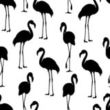 flamant d'isolement Oiseau exotique Silhouette de flamant, illustrations illustration stock