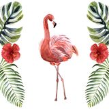 Flamant de rose d'aquarelle d'isolement sur un fond blanc illustration stock