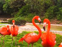 Flamant des Caraïbes images stock